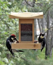 Pagoda bird feeder with Acorn Woodpeckers